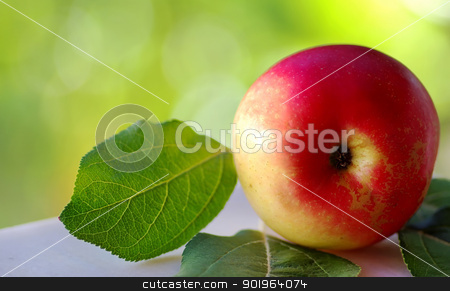Closeup of red apple stock photo, Closeup of red apple on green background by Inacio Pires