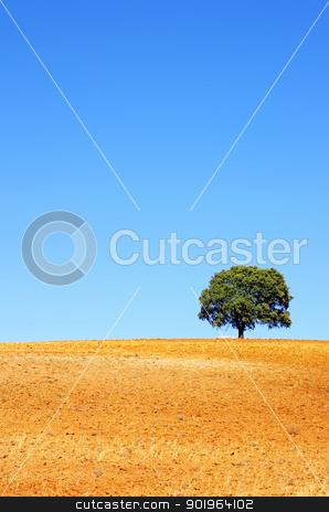 solitary tree in plowed field stock photo,  solitary tree in plowed field by Inacio Pires