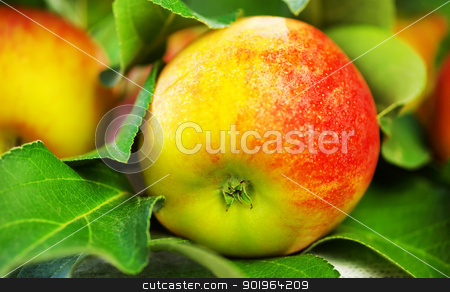 ripe red apple on table, green leaves stock photo, ripe red apple on table, green leaves by Inacio Pires