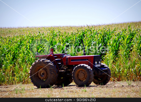 Old tractor in cornfield stock photo, Old tractor in cornfield at Portugal by Inacio Pires