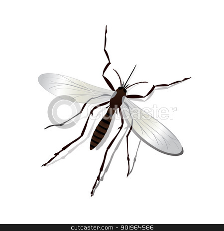 Mosquito stock vector clipart, Realistic mosquito and shadow illustration, isolated and grouped objects over white. by Richard Laschon
