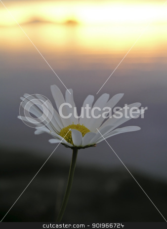 Wild Flower and Sunset stock photo, Beautiful wild flower and sunset by Ingvar Bjork