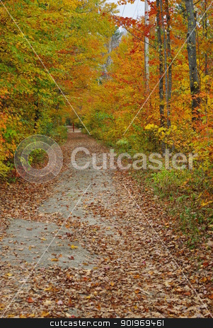 Fall in Vermont stock photo, Fall foliage surrounding a walking path.  by Amanda Perkins