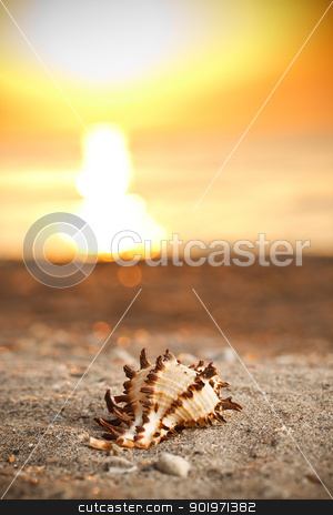 Shell on sunset stock photo, Shell on sunset sea sand beach  by Grafvision