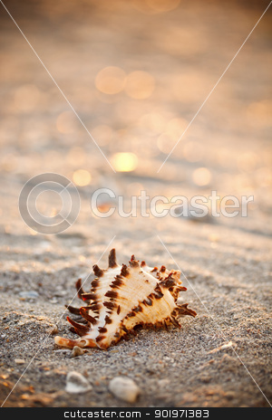 Shell on sea sand stock photo, Shell on sea sand beach  by Grafvision
