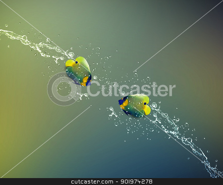 Angelfish jumping stock photo, Angelfish jumping, good concept for Recklessness and challenge concept.  by Designsstock