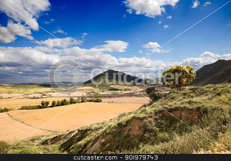 Landscape And Tree stock photo, Rural landscape with tree and crop fields by carloscastilla