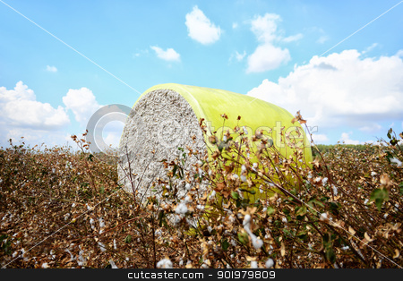 Cotton module stock photo, Cotton module. Harvesting in cotton fields. by lermannika
