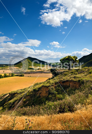 Landscape  stock photo, Landscape with field,tree and blue sky by carloscastilla