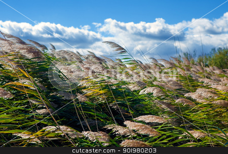 Nature background  stock photo, Close image of blue sky and vegetation by carloscastilla