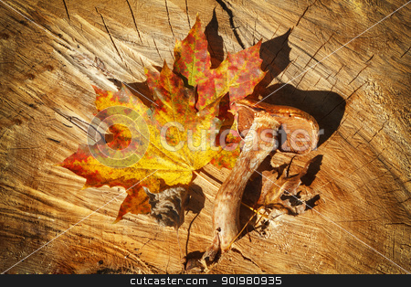 Autumn Leaves and mushroom over wooden background stock photo, composition of autumn leaves and mushroom over wooden background by Artush