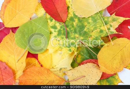 Color composition from autumn leaves stock photo, Color composition from autumn leaves for background or backdrop by Artush