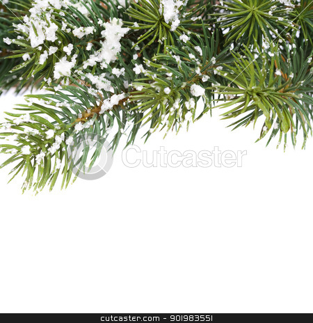 branch of Christmas tree stock photo, branch of Christmas tree over white by klenova