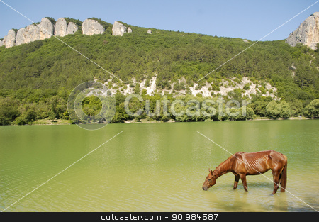 Drinking Horse stock photo, Horse drinking in a pond, near the forests with mountains by Kotkoa