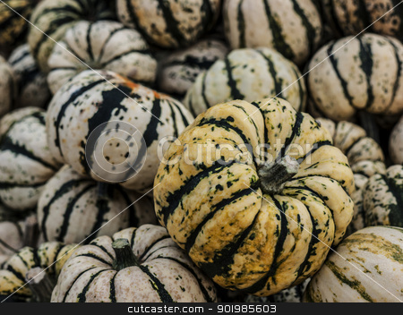 Pumpkin-Sweet-Dumpling-pile stock photo, Pumpkin - a wonderful vegetable in autumn, which comes in many variations, here the variety Sweet Dumpling by Heike Jestram