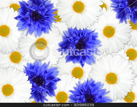 Background of blue and white flowers stock photo, Abstract background of blue and white flowers for your design. Close-up. Studio photography. by Andrey Khritin