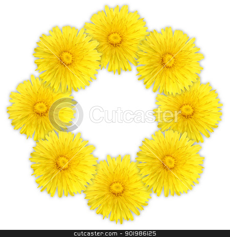 Frame as ring of yellow flowers stock photo, Frame as ring of yellow flowers on white background. Close-up. Studio photography. by Andrey Khritin