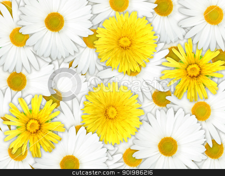Background of yellow and white flowers stock photo, Abstract background of yellow and white flowers for your design. Close-up. Studio photography. by Andrey Khritin