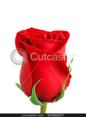 Red bud-flower of rose stock photo, One a red bud-flower of rose. Close-up. Isolated on white background. Studio photography. by Andrey Khritin