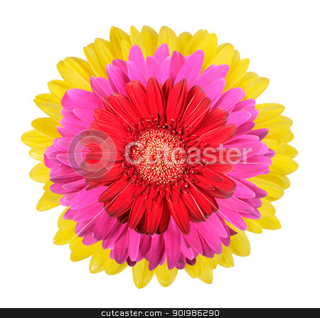 Three flowers stock photo, Three flowers isolated on white background. Close-up. Studio photography. by Andrey Khritin