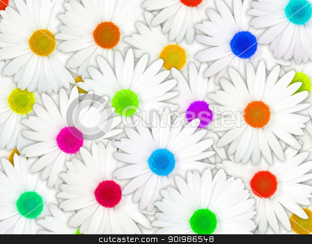 Background of white flowers with motley center stock photo, Abstract background of white flowers with motley center for your design. Close-up. Studio photography. by Andrey Khritin