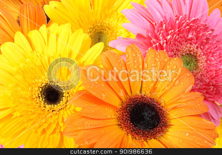 Background of flowers stock photo, Abstract background of flowers with dew for your design. Close-up. Studio photography. by Andrey Khritin