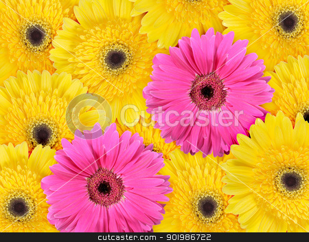 Abstract background of yellow and pink flowers stock photo, Abstract background of yellow and pink flowers. Close-up. Studio photography. by Andrey Khritin