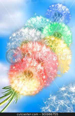 Dandelion flowers on blue sky background stock photo, Group of color fluffy dandelion flowers on blue sky background as rainbow clouds. Close-up. Studio photography. by Andrey Khritin