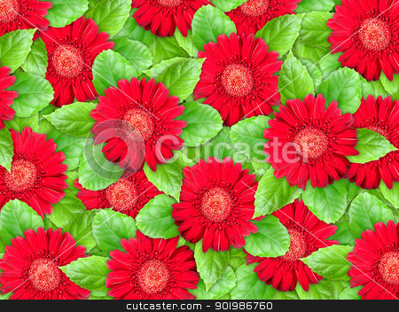 Background of red flowers and green leaf stock photo, Abstract background of red flowers and green leaf for your design. Close-up. Studio photography. by Andrey Khritin
