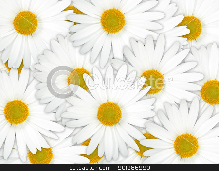 Abstract background of white flowers stock photo, Abstract background of white flowers. Close-up. Studio photography. by Andrey Khritin