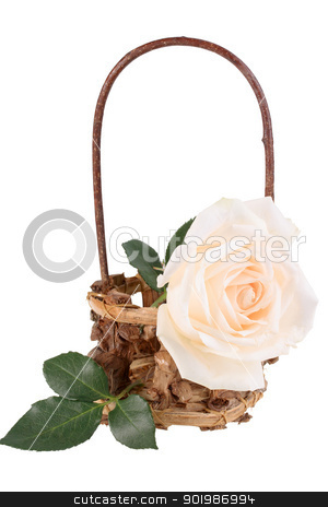 One light-pink rose in basket stock photo, One light-pink rose in basket. Isolated on white background. Close-up. Studio photography. by Andrey Khritin