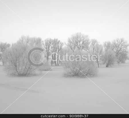 Scrubland stock photo, Bushes in the winter seem very sleepy by soft lighting. Snowed in meadows in the Elbe Valley a nature protection area. by Bastian Kienitz