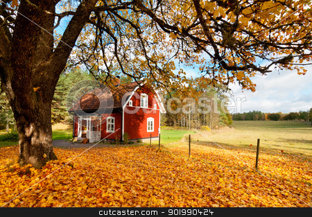 Red Swedish house amongst autumn leaves stock photo, Picturesque fall background of a quaint traditional red Swedish house amongst a carpet of yellow orange autumn leaves in a peaceful country landscape by Kai Schirmer