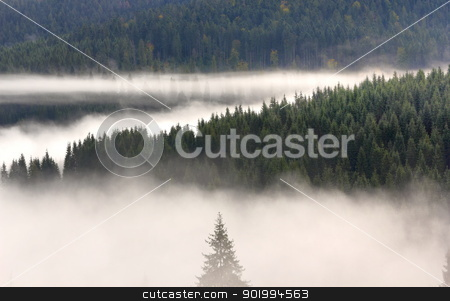 misty morning in the woods stock photo, spruce forest covered by the morning mist by coroiu octavian