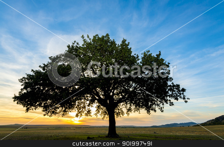 tree on field stock photo, sunset and siluet of tree on field by manaemedia