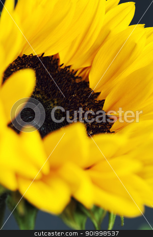 sunflower stock photo, Flowers background with beautiful sunflowers by klenova