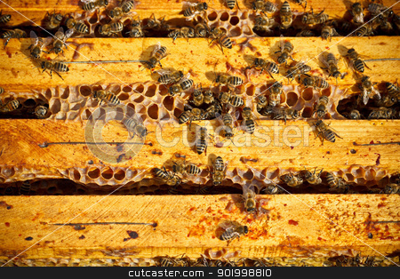 Worker bees stock photo, Many worker bees on honeycomb  by Grafvision