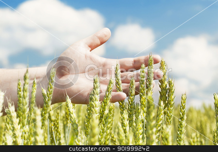 Hands near ears on cereals field stock photo, Hands near ears on cereals field in summer  by ARNIS LAZDINS