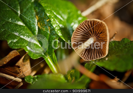 Wild mushrooms stock photo, Wild mushrooms growing in a forest  by Grafvision