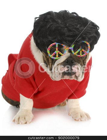 funny dog stock photo, funny dog - english bulldog wearing black wig and peace glasses isolated on white background by John McAllister