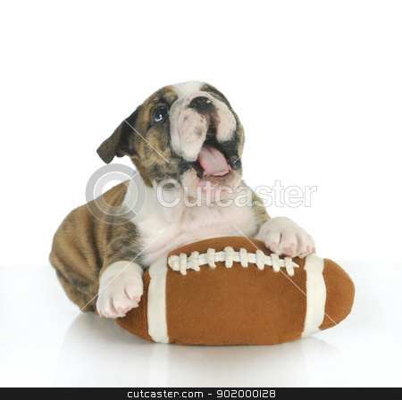 playful puppy stock photo, playful puppy - english bulldog puppy with football isolated on white background by John McAllister