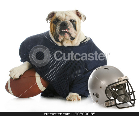sports hound stock photo, sports hound - english bulldog dressed up like a football player on white background by John McAllister