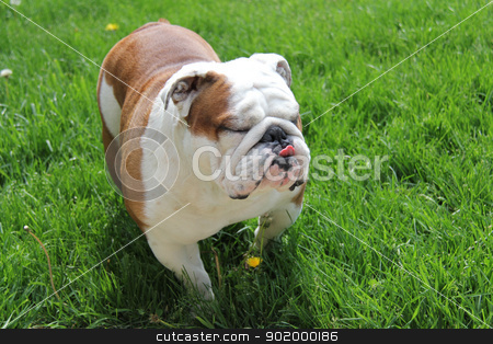 funny dog stock photo, funny dog by John McAllister