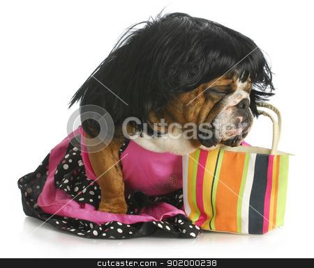 female dog stock photo, female dog - english bulldog wearing wig and dress sitting beside purse by John McAllister