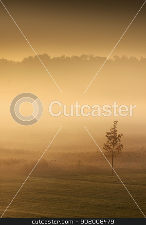 Foggy morning stock photo, Foggy morning scene in early autumn time. by Sreedhar Yedlapati