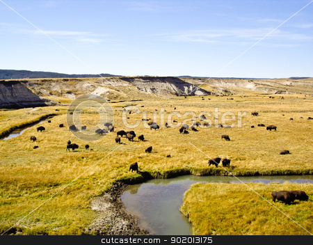 Buffalo at Oxbow Bend Yellowstone stock photo, Buffalo graze at Oxbow Bend in wilderness by emattil