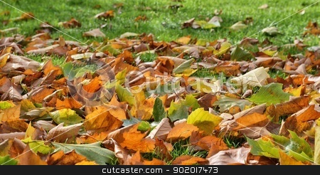 Autumn Leaves stock photo, Autumn leaves of a sycamore tree by Volker Pape