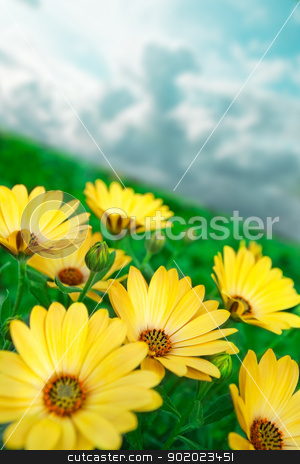 Yellow flowers stock photo, Yellow flower close up and green grass by carloscastilla