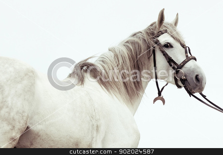 Stallion stock photo, Beautiful Tersk stallion against sky by Yulia Chupina