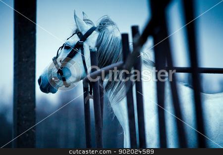 Sad horse stock photo, Sad horse looking afar. Photo in dark blue tones. by Yulia Chupina